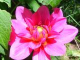 Blumen11.JPG