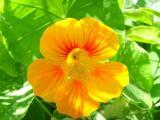 Blumen12.JPG