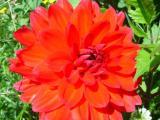 Blumen13.JPG