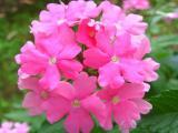 Blumen7.JPG