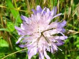 Blumen9.JPG