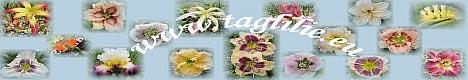 Taglilien,Taglien und noch mehr Taglilien