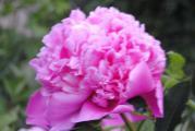 rosen 058.JPG