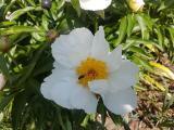 k-Krinkled White  26.05.18 048.jpg