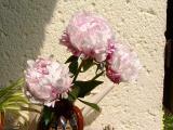 k-Garten Kyhna 015.jpg