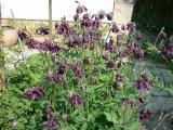 k-Garten  Mai '09 031.jpg