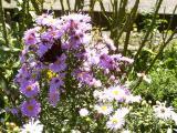 k-Garten September 2008 043.jpg
