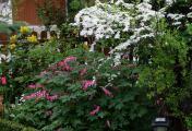 Garten26492.jpg