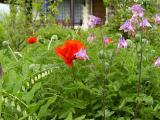 k-Garten 15.05.08 003.jpg