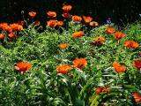 k-Garten  Mai '09 143.jpg