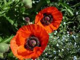 k-Garten  Mai '09 146.jpg