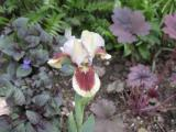 Iris1.jpg