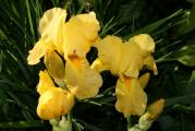 Little Yellow (2).JPG