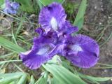 Iris Neutron.JPG