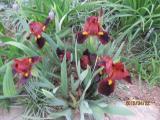 IMG_0720 small.jpg