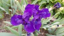 k-Blauzwerg 20210509_181226.jpg