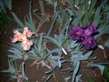 Blueten2008 633.jpg