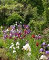 Blick über das Irisbeet 27.5.10.jpg
