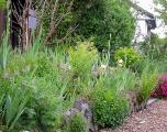 Iris-Beet gelb-orange-rot-braun 9.5.12.jpg