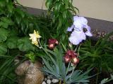 Garten Mai 22 021.jpg