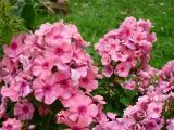 k-Garten Juli '09 093.jpg