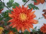 orangebraun hoch_.jpg