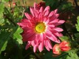 10 pink_.jpg