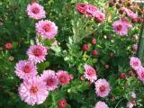 rosa klein__.jpg