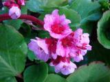 k-Herbstblüte.JPG