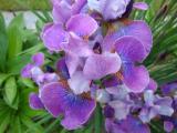 k-Lavendelwein.jpg