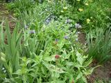 k-Garten  Mai '09 065.jpg