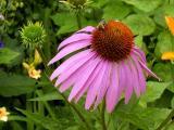 k-Garten Juli 2008 062.jpg