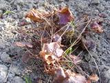 K640_Garten  April `09 002.JPG