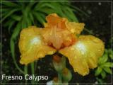Fresno Calypso.jpg