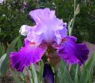 Iris Socialist 12.5.11.jpg