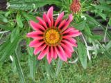 Garten Juni 2011 105.jpg