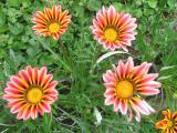 Garten Juni 2011 107.jpg