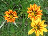 Garten Juni 2011 108.jpg