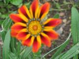 Garten Juni 2011 114.jpg