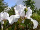 English Garden mit Mitsuko 18.9.11.jpg