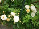 k-Garten Juni '09 033.jpg