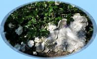 P1030593-crop.JPG