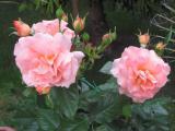Garten Mai 2011 139.jpg