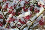 Februar 2013 011.jpg