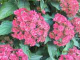 IMG_5876 small.jpg