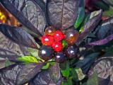 plant-17994_640.jpg