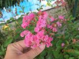 IMG_5555 small.jpg