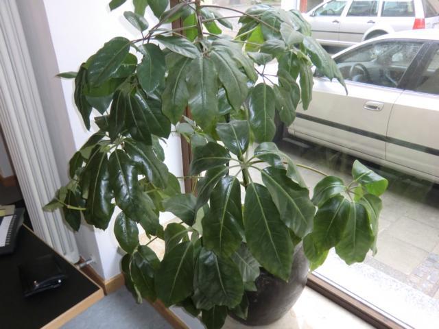 k bel und zimmerpflanzen 3 pflanzen zu bestimmen. Black Bedroom Furniture Sets. Home Design Ideas