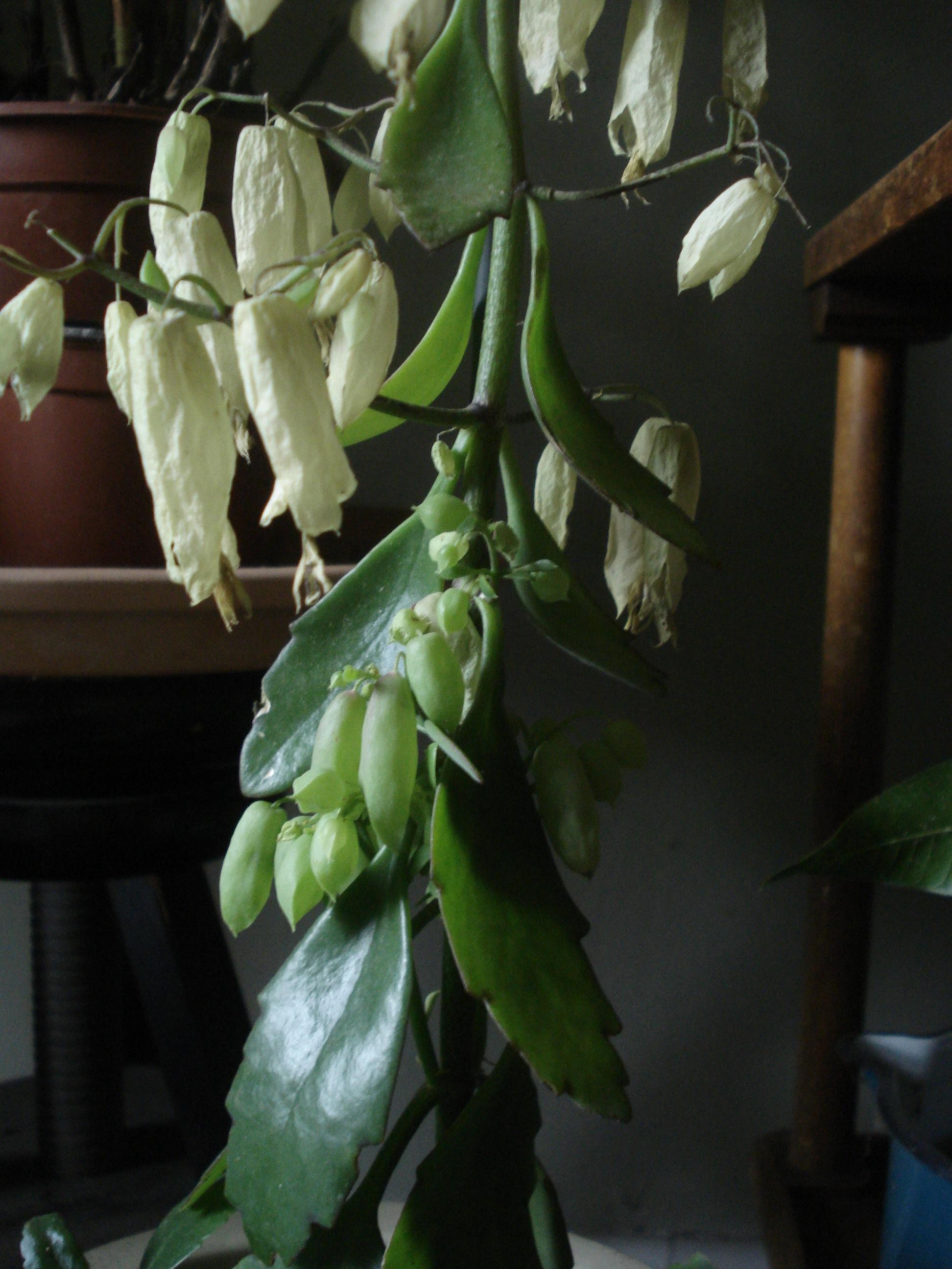 Wie heißt diese pflanze