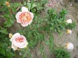k-Garten  Mai '09 Teil 2 032.jpg